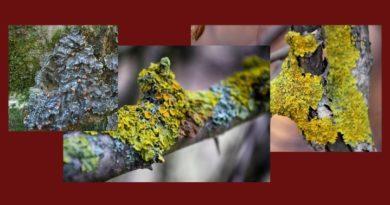 лишайник мох избавиться