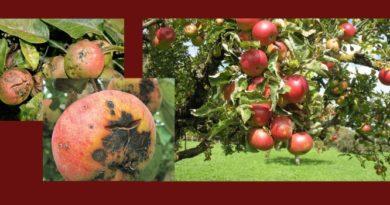 парша яблони меры защиты