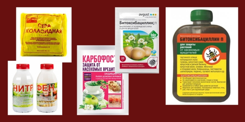 Препараты для борьбы с махровостью смородины