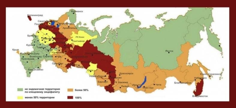 Эндемичные территории России по клещевому энцефалиту