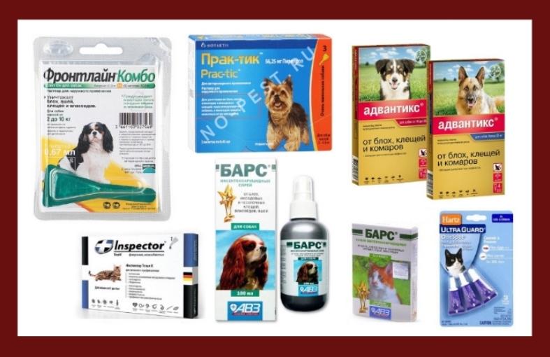 Примеры препаратов для защиты домашних питомцев от укусов клещей