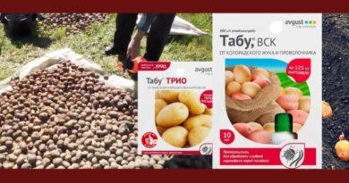 обработка картофеля препаратом табу