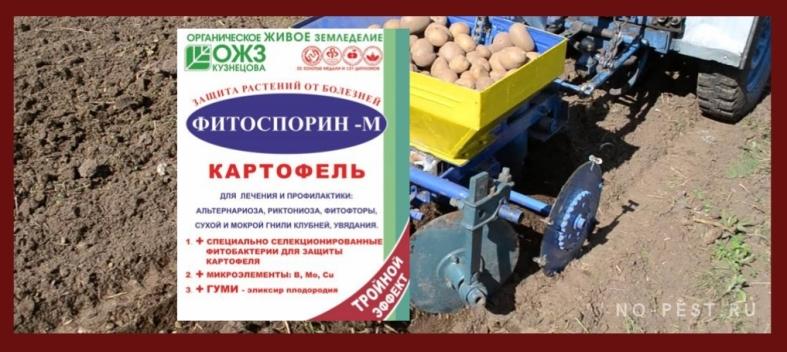 Фитоспорин обработка картофеля перед посадкой