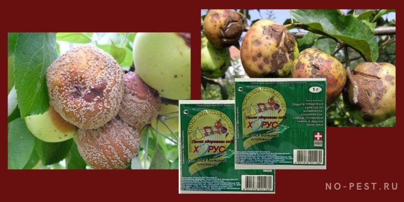 препарат Хорус - обработка семечковых плодовых культур от болезней