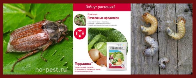 """Защита растений от личинок майского жука (хруща) препаратом """"Террадокс"""""""