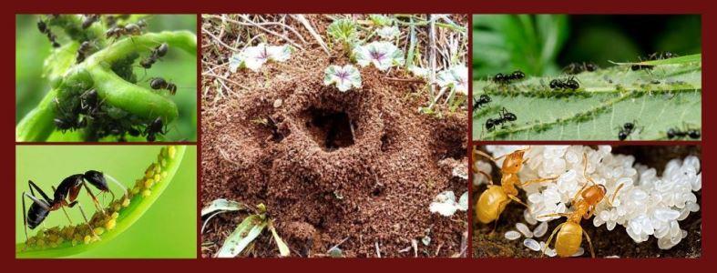 Избавиться от муравьев на участке - пошаговый план