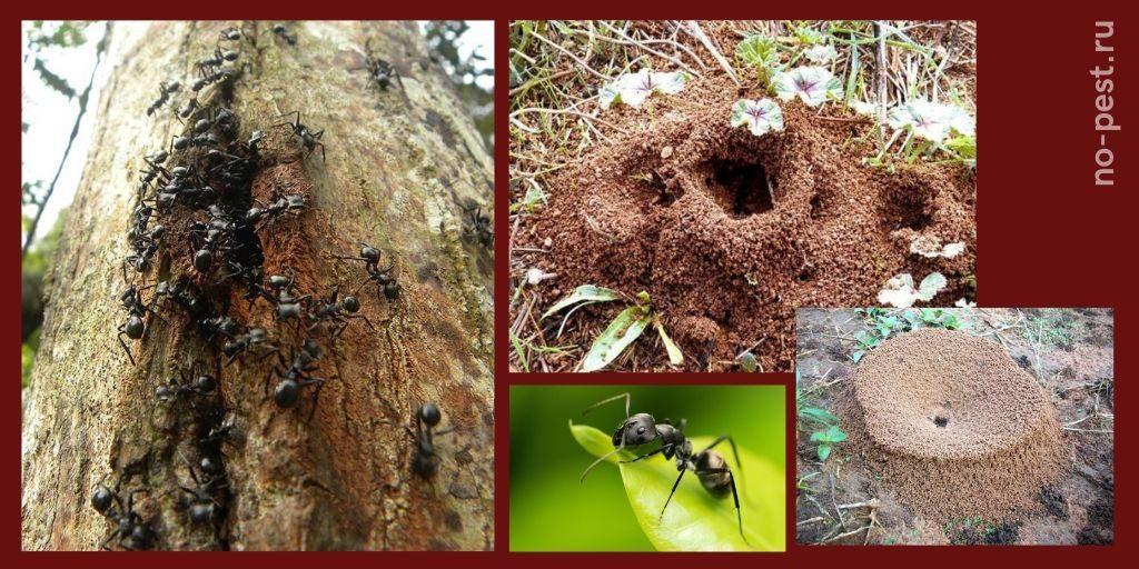"""Жилища"" муравьев на садовых участках"