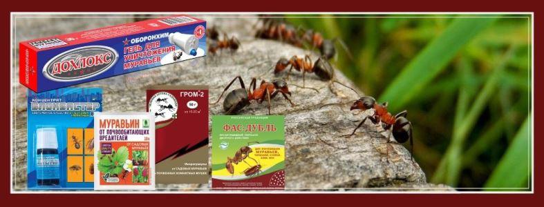 средства от тли сравнительный анализ инсектицидов