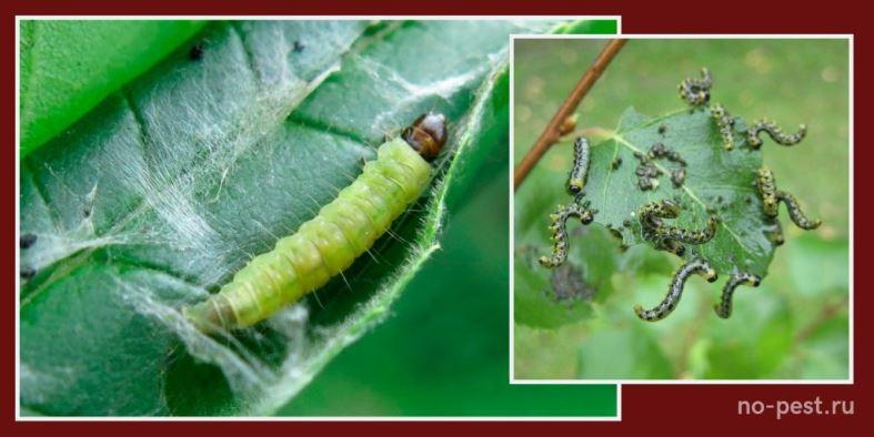 Гусеница листовертки (слева) и гусеница пилильщика (справа)