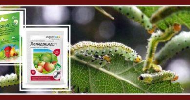 Лепидоцид - биоинсектицид от гусениц. Инструкция по применению