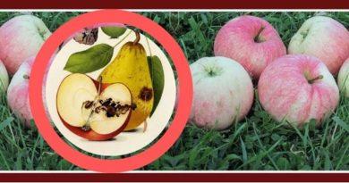 Яблоневая плодожорка - кто это и как защитить урожай