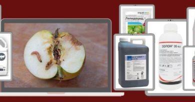 Средства от яблоневой (яблонной) плодожорки - ТОП-13 лучших инсектицидов