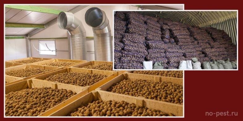 Обеспечение вентиляции в овощехранилищах - важный фактор сохранности урожая