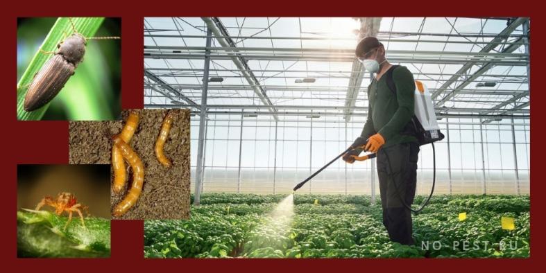 инсектициды применение